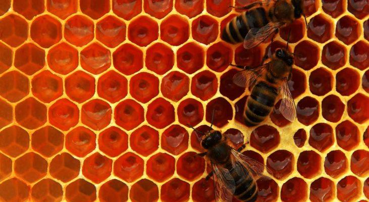 honeybee-dark